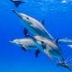 delfin-dlouholeby-egypt-foceni-pod-vodou-karel-fiala-dolphin-10