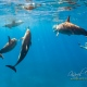 delfin-dlouholeby-egypt-foceni-pod-vodou-karel-fiala-dolphin-14