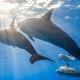 delfin-dlouholeby-egypt-foceni-pod-vodou-karel-fiala-dolphin-15