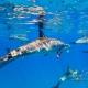 delfin-dlouholeby-egypt-foceni-pod-vodou-karel-fiala-dolphin-20