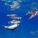 delfin-dlouholeby-egypt-foceni-pod-vodou-karel-fiala-dolphin-21