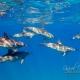 delfin-dlouholeby-egypt-foceni-pod-vodou-karel-fiala-dolphin-22