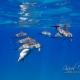 delfin-dlouholeby-egypt-foceni-pod-vodou-karel-fiala-dolphin-28