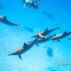 delfin-dlouholeby-egypt-foceni-pod-vodou-karel-fiala-dolphin-34