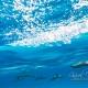 delfin-dlouholeby-egypt-foceni-pod-vodou-karel-fiala-dolphin-36