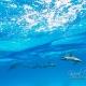 delfin-dlouholeby-egypt-foceni-pod-vodou-karel-fiala-dolphin-43