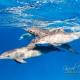 delfin-dlouholeby-egypt-foceni-pod-vodou-karel-fiala-dolphin-55