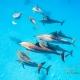 delfin-dlouholeby-egypt-foceni-pod-vodou-karel-fiala-dolphin-59