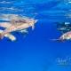 delfin-dlouholeby-egypt-foceni-pod-vodou-karel-fiala-dolphin-64