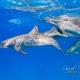 delfin-dlouholeby-egypt-foceni-pod-vodou-karel-fiala-dolphin-69