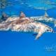 delfin-dlouholeby-egypt-foceni-pod-vodou-karel-fiala-dolphin-79