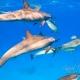 delfin-dlouholeby-egypt-foceni-pod-vodou-karel-fiala-dolphin-87