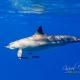 delfin-dlouholeby-egypt-foceni-pod-vodou-karel-fiala-dolphin-89