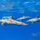 delfin-dlouholeby-egypt-foceni-pod-vodou-karel-fiala-dolphin-90