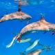 delfin-dlouholeby-egypt-foceni-pod-vodou-karel-fiala-dolphin-91