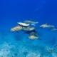delfin-dlouholeby-egypt-foceni-pod-vodou-karel-fiala-dolphin-97