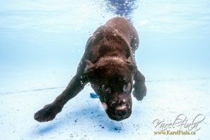 underwater dog